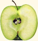 Apfel oder Apfelscheiben