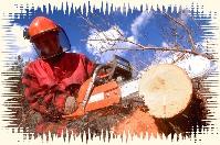 Die richtige Schutzbekleidung beim Sägen und Fällen von Bäumen tragen
